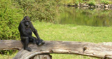 Evolution versus Schöpfung